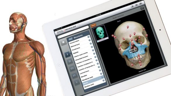 top 5 best free apps to learn human anatomy