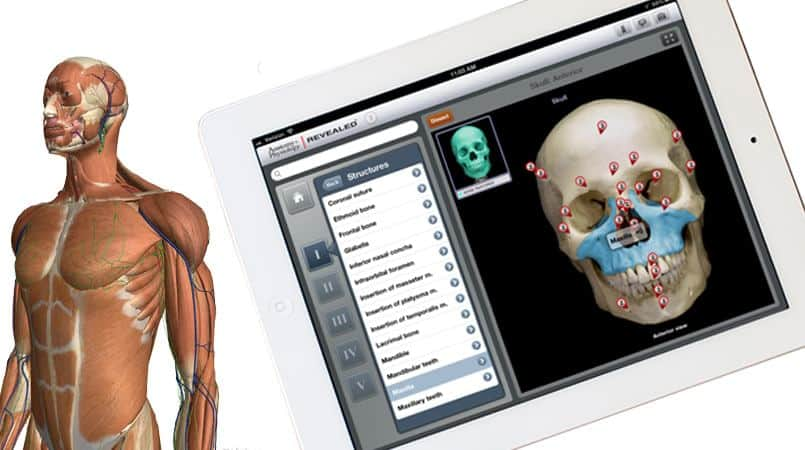 5 Best Apps to Learn Human Anatomy